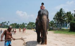If you can't find a taxi, you can always ride an elephant ))))
